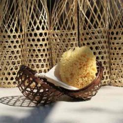 Mediterranean Sea sponge -...